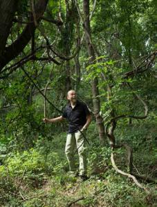 御堂地区の荒廃地はジャングル化していた。 4年後にはきれいなブドウ畑になっている?